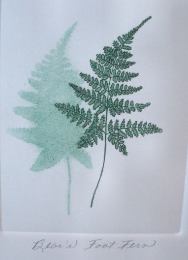 bear's foot fern tid