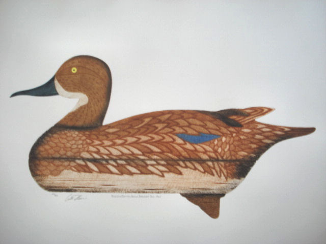 blue wing teal hen barnegat 1965 full