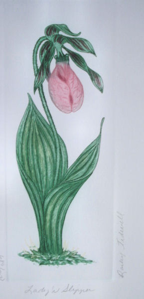 lady_slipper